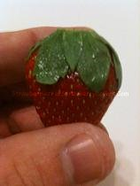 Strawberry with Large Calyx